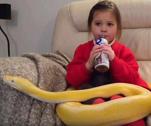 1533095329127_Python-and-little-girl
