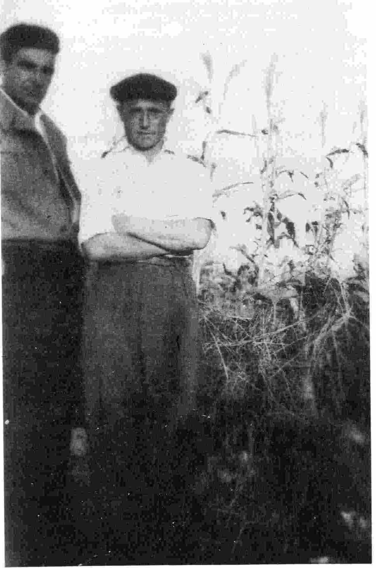 Dom Nikolle Mazreku dhe Pader Gardini, Saver, viti 1955